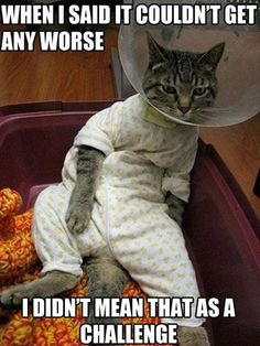 Funny Cat Images with Captions