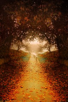"satakentia: "" The Path - Zagreb, Croatia """