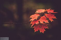 Fall photography, nature, autumn leaves, red, branches, Fall colors, blur, vibrant, beauty, brilliant, leaves,  Burst