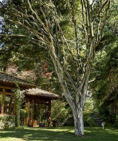 Pau-ferro: a árvore, hoje enorme, foi plantada próximo à casa para criar uma área de sombra. É embaixo dela que a família se reúne para tirar fotos em datas especiais (Foto: Edu Castello/ Editora Globo)