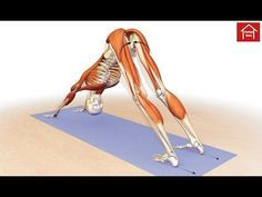 """An excerpt from """"Yoga Mat Companion 1 - Anatomy for Vinyasa Flow and Standing Poses"""" . An excerpt from """"Yoga Mat Companion 4 - An. Dog Doctor, Yoga Fitness, Health Fitness, Yoga Bewegungen, Piriformis Muscle, Shoulder Muscles, Shoulder Joint, Dog Poses, Muscle Anatomy"""