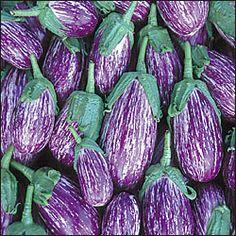 Listada de gandia          Deze aubergine is bekend sinds 1850 en vormt prachtige ovale vruchten met lavendelkleurige strepen. De plant wordt niet hoog, zo'n 35 cm, maar produceert overvloedig. Het vruchtvlees is wit van kleur en mild van smaak.