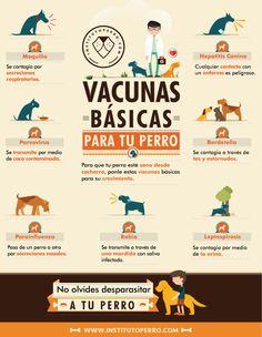Vacunas básicas para un perro