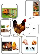 - Our Farm Animal lapbook is finally finished! We worked for quite some time on this lapbook, not because it was so extraordinary. Preschool Learning Activities, Animal Activities, Preschool Worksheets, Farm Animals Preschool, Animals For Kids, Animals And Pets, Wild Animals, Baby Animals, Theme Nature