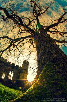 castle & tree