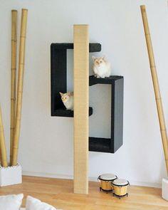 CatModul Regelsystem für Katzen