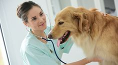 """18 Honest Confessions From Veterinarians - Life saving animal lovers"""