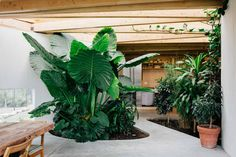 Luscious Artist Studio in Sonoma with Indoor Garden by Mork-Ulnes Architects… Jungle Decorations, Butterfly Roof, Dark Living Rooms, Interior Garden, Architecture, Evergreen, Indoor Plants, Interior Decorating, Interior Design