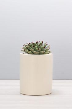 Concrete Crafts, Concrete Planters, Planter Pots, Cactus Pot, Pencil Cup, Flower Pots, Flowers, Succulents, Artisan