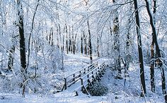 Give the gift of the Morton Arboretum