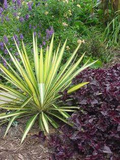 Декоративные растения для сада: Топ-10