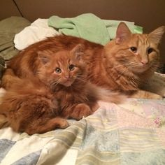 Ginger Cat and His Mini-Me Are Completely Inseparable - We Love Cats and Kittens