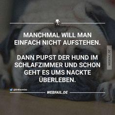 Türschilder Außen- & Türdekoration Achtung Hund,hundeschild,warnschild,gravurschild,12 X 8 Cm,freilaufender Hund