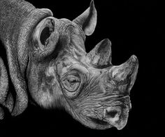 White Rhino by Paul-Shanghai on DeviantArt I Hug You, Pencil Drawings Of Animals, Bristol Board, Shanghai, How To Look Pretty, Animals Beautiful, Lion Sculpture, Elephant, Deviantart