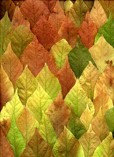 49833 leaves | Flickr - Photo Sharing!
