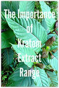 The Importance of Kratom Extract Range