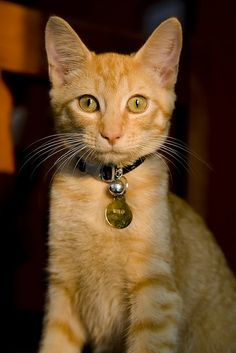 """adorable Ginger youngster, """"Milo"""""""