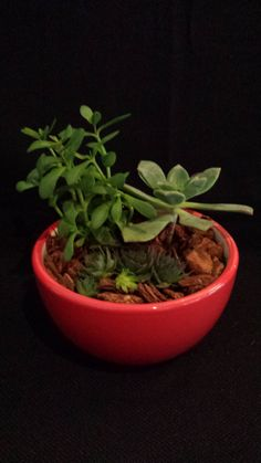 Living succulent garden in a red glazed ceramic by UrbanSucculent, $46.00