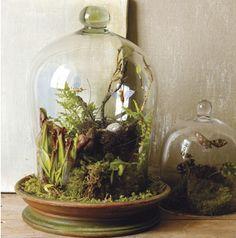 woodland terrarium - Table Centerpiece