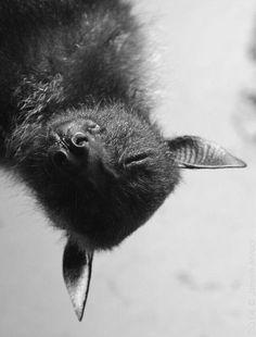 Sleep Little Bat......................