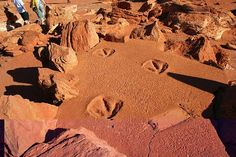 Rare tidal movements expose Kimberley dinosaur tracks