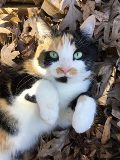 Modern Cat's Photo Contest - Patches