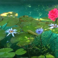 Lily Pond @ The Zoo