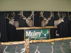 Deer porn deer hunting deer muley deer elk boy elk deer