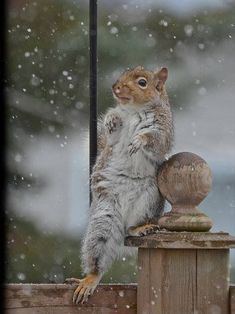 Squirrel Striking a Pose.
