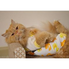 """From @mr_omalley_thecat: """"Nothing to see here…..just a cat in ducky pajamas! """" #catsofinstagram"""