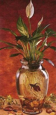 Beta Fish Plant Craft...The Peace Lily plant is perfect for this display and easy to care for. It's very important to change the water at least once a week. (click the pic for full 'how to' instructions)