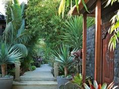 A Bali-inspired garden makeover. Styling by Phoebe McEvoy. Photography by Michael Wee. Need help with gardening? We can help. Visit our website www… Backyard Plan, Backyard Pool Designs, Backyard For Kids, Backyard Ideas, Landscaping Las Vegas, Small Backyard Landscaping, Pool Landscape Design, Landscape Plans, Bali