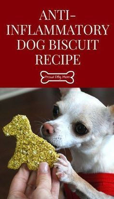 Anti-Inflammatory Dog Biscuit Recipe | Homemade Dog Treats | Gluten-Free Dog Treat Recipe | DIY Dog Treats | - Tap the pin for the most adorable pawtastic fur baby apparel! You'll love the dog clothes and cat clothes! <3