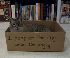 An epic gallery of cat shaming pictures that prove these cats are the naughtiest in the world. A hilarious cat shaming picture gallery. I Love Cats, Crazy Cats, Cool Cats, Cat Shaming, Public Shaming, Funny Animal Pictures, Funny Animals, Animal Memes, Animal Quotes