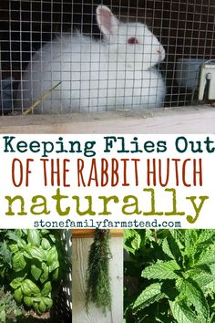 Flies pose an icky and sometimes deadly problem for our bunnies. Keeping flies out of the rabbit hutch isn't hard and if we are diligent we can improve our rabbit's chances of avoiding fly strike. Flies pose an icky and sometimes dead Rabbit Pen, Rabbit Farm, Rabbit Toys, House Rabbit, Silly Rabbit, Rabbit Cages Outdoor, Outdoor Rabbit Hutch, Meat Rabbits, Raising Rabbits