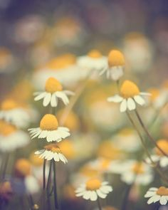 Honey yellow,dark forest green, and pure white.
