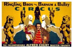In Liverpool, Alfred Court embarked eighty animals, twenty employees, and all his equipment on the West-Chatala, which took sail for the New World. His wife and himself embarked soon after on the Manhattan in Genoa, Italy, which was close to Nice, where they now lived. They arrived in Sarasota, Florida, where Ringling Bros. and Barnum & Bailey had its winter quarters, in time for rehearsals before the season opening at Madison Square Garden, in New York, on April 4, 1940.