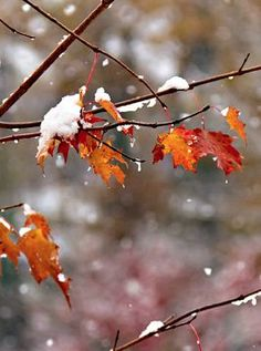 at some point in november comes that moment the very air changes, and snow is imminent; we straddle the seasons, a cusp of remorse on one side for the autumn that's past, anticipation at the other, for the winter ahead.