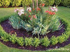 Metamorfozy ogrodowe - strona 107 - Forum ogrodnicze - Ogrodowisko