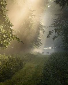 "flowersnymph: ""Breakfast Time by Stu Meech | Flickr "" Deer Running, Breakfast Time, Wonderful Places, Paths, Pathways"
