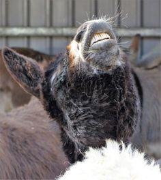 @ Island Farm #Donkey Sanctuary