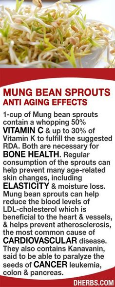 1-cup of Mung bean sprouts contain 50% Vitamin C & up to 30% of Vitamin K to fulfill the suggested RDA, both necessary for bone health. Regular consumption can help prevent many age-related skin changes, including elasticity & moisture loss. The sprouts can help reduce LDL-cholesterol which helps prevent atherosclerosis, the most common cause of cardiovascular disease. They also contains Kanavanin, said to be able to paralyze the seeds of cancer in leukemia, colon & pancreas. #dherbs