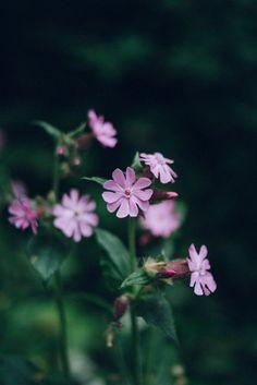 Spring Wildflowers | Jet & Indigo