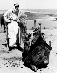 Peter O'Toole goofing around with a camel during the filming of Lawrence of Arabia.