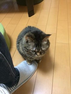 What is the deal with cats sitting on toes?