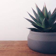 ferm LIVING Concrete pot in grey: https://www.fermliving.com/webshop/shop/green-living/pot-dark-grey-small.aspx
