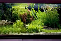 10 planted tank myths | Features | Practical Fishkeeping
