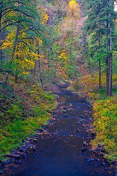 Trail, Silver Falls State Park, Oregon