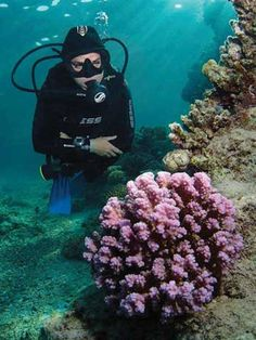 Underwater Photography Tips: Maximizing Compact Cameras. Paul Colley