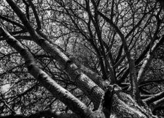 Captured by Blind veterans UK member Keith Harness, this black and white image looking up at the sky through a tree in Stanmer park, Lewes was captured during the groups second field trip of the week. Image Look Up, Brighton Photography, White Image, Arts And Crafts Projects, Spring 2014, Blind, Sky, Black And White, Park